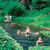 "Love to swim but hate the chlorine? Why not convert your pool into a natural pool that offers a chemical-free way to stay cool.<br /> Natural Swimming Pools recreate pristeen ponds and mountain pools found in nature. The water is kept sparkling clean by circulating it through an ecosystem of water plants. The result is a lush indigenous aquatic garden cradling a clear, natural pool, the water of which is perfectly clear, soft on the skin and infused with healing energy. No Salt, no chemicals, no steralisation equipment.<br /> Conventional pools use poisons in the form of chemicals, salt (a different form of chlorine), ionisers, oxygen, copper, silver, electrodes (etc.) to kill algae and bacteria. The problem with chemical/sterile pools is that nutrients tend to build up over time, creating perfect conditions for algae and bacteria to bloom. This is why you need to use more and more chemicals in normal pools – because there are more and more nutrients in the system. Natural swimming pools need less and less care as nutrients are stripped out of the water leaving nothing behind for algae or bacteria<br /> (from <a href=""https://facebook.com/greenrenaissance/photos/pb.120085081342618.-2207520000.1392904696./754120364605750"">https://facebook.com/greenrenaissance/photos/pb.120085081342618.-2207520000.1392904696./754120364605750</a>"