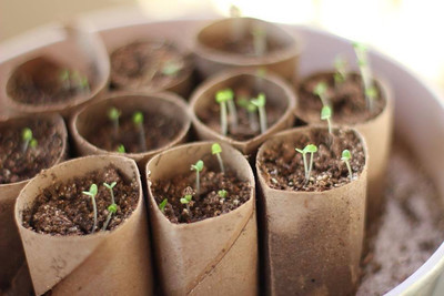 Put a ball of newspaper in first to stop the soil falling out and drying out too fast  You can also use cardboard egg cartons if you are concerned about the bottom!