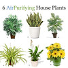 "6 AIR PURIFYING HOUSE PLANTS<br /> Any houseplant produces oxygen, as well as adding to the beauty and coziness of your home. These plants are especially good at being ""air filters"" which is great for someone with asthma, allergies, or just likes the idea...Continue reading here: <a href=""http://PositiveMed.com/2012/11/03/plants-that-clean-your-air"">http://PositiveMed.com/2012/11/03/plants-that-clean-your-air</a>"