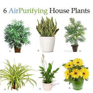 """6 AIR PURIFYING HOUSE PLANTS Any houseplant produces oxygen, as well as adding to the beauty and coziness of your home. These plants are especially good at being """"air filters"""" which is great for someone with asthma, allergies, or just likes the idea...Continue reading here: http://PositiveMed.com/2012/11/03/plants-that-clean-your-air"""