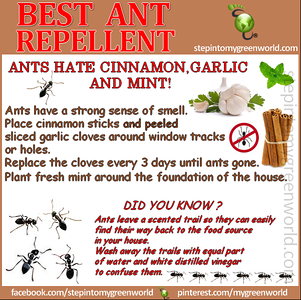 ANT REPELLENT