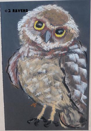 Burrowing owlet pastel, SOLD