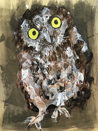 5/17/2020 Western Screech Owl