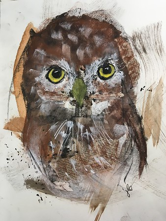 1/9 Northern Pygmy Owl with collage