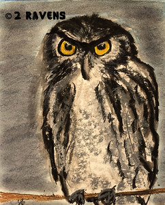 Western Screech Owl, charcoal   SOLD