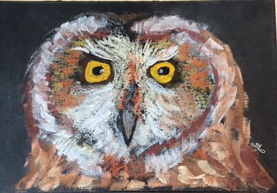 8x10 pastel, short-eared owl, SOLD