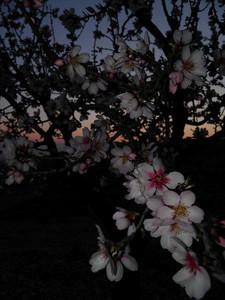 Flores Como hay bastantes del bando de la huerta, las procesiones, etc..  Pense que seria una buena idea subir esta foto para hacer ver que en Murcia tambien tenemos naturaleza si sabemos donde encontrarla  Autor:Alex Ena