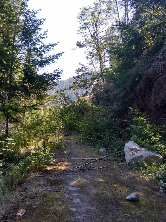 landslide blocking forest road