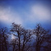 131 /365 Winter Sky