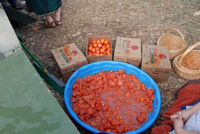 RF-TomatoShow-0007-2