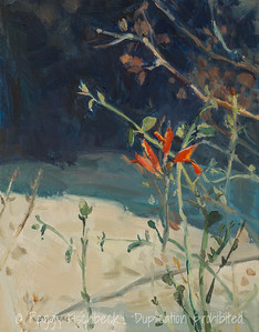 Borrego Bloom, 11x14, oil on canvas  E0487