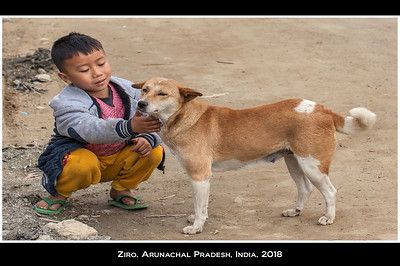 Unlike most Hindus, the Apatani keep dogs as pets, so there are few, if any, street dogs. Photo credit: Jill