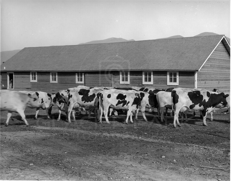 Swede Hori Ranch - 1915