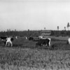 Swede Hori Ranch - 1915<br /> RE Marble - Photo<br /> MA-0166