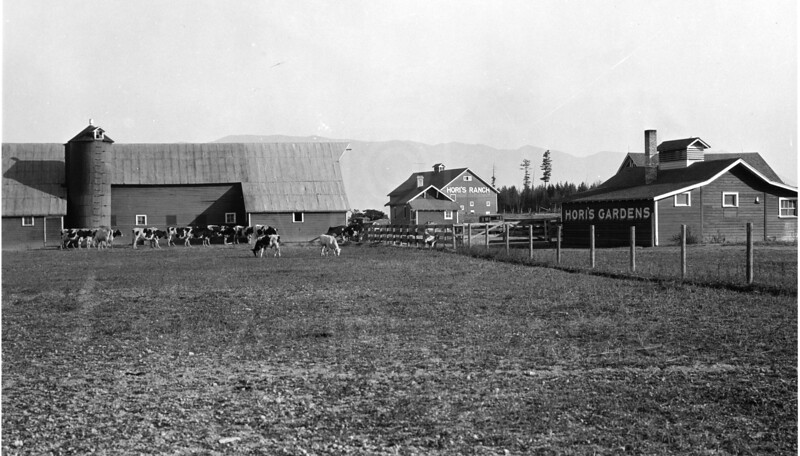 M.M. Hori Farm  1915<br /> A small part of Swede Hori's operations in Whitefish.<br /> <br /> R.E. Marble Photo<br /> <br /> MA-0161