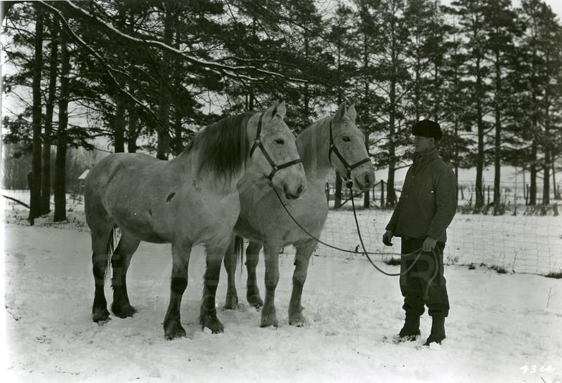 Ferde Greene Photo<br /> 2/9/1920, Reno Bir Oak Farm, Uncle Lewis Davis<br /> f16 1/25<br /> 4304