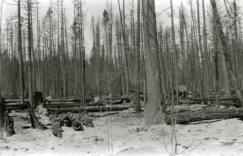 Ferde Greene Photo<br /> 8/29/1929 Near Cedar Creek<br /> 4466