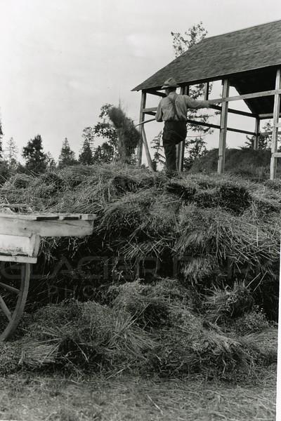 Ferde Greene Photo<br /> 9/29/1918 3PM, Ernie Esterbrook stacking oats, Egan Slew, Montana<br /> f11 1/25<br /> 1272