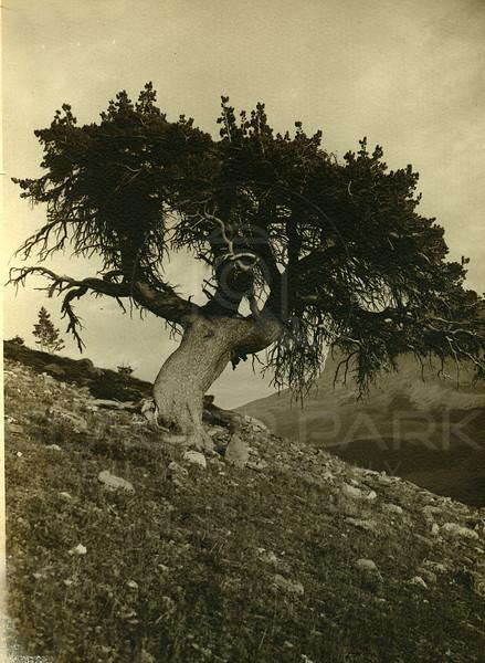 The Sentinal 1920's<br /> R E Marble Photo<br /> MA-007