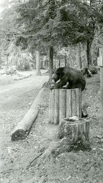 Ferde Greene Photo, 5/19/1939, F11, 1/25, Sprague Creek Campground, Glacier National Park,Montana