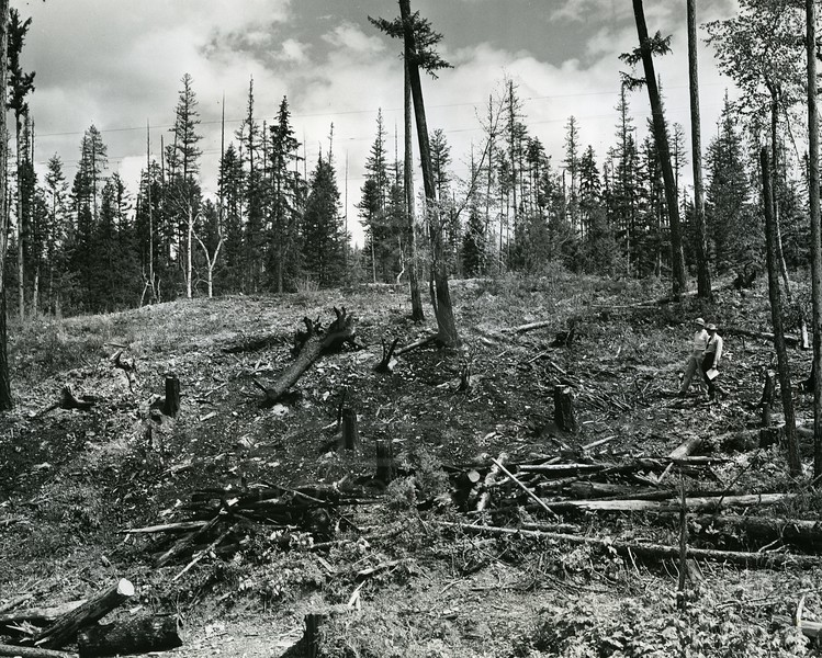 Logging for Hungry Horse Dam