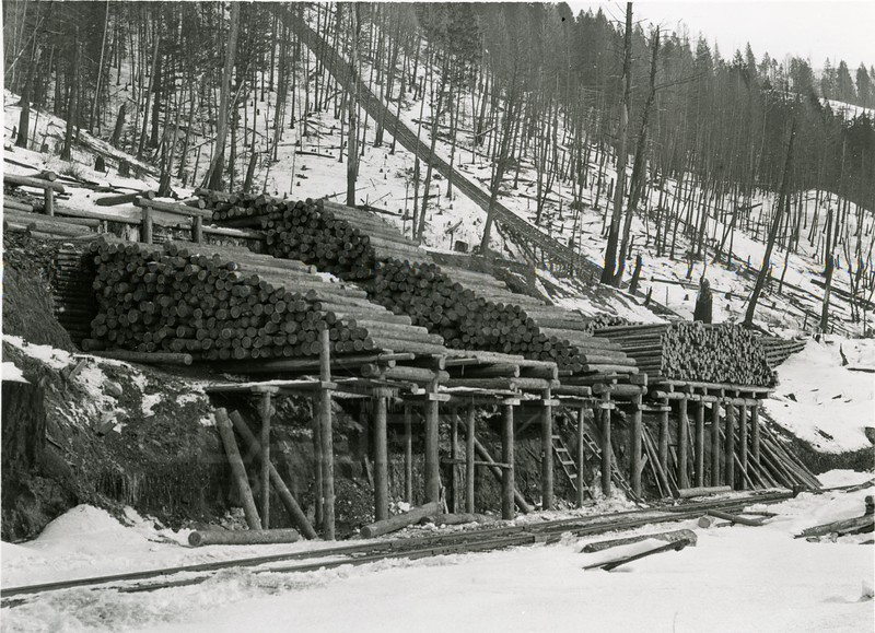 Ferde Greene Photo<br /> Ernest Esterbrook had contract for mine props.  All timbers were used as mine props. 1913<br /> 1156