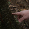 Matt Kasson points at Chestnut tree.<br /> 35214 WVU Mag American Chestnut<br /> WVU Photo/ Raymond Thompson<br /> WVU Magazine