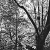 Forest in Flint Film Photography 3