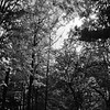 Forest in Flint Film Photography 5