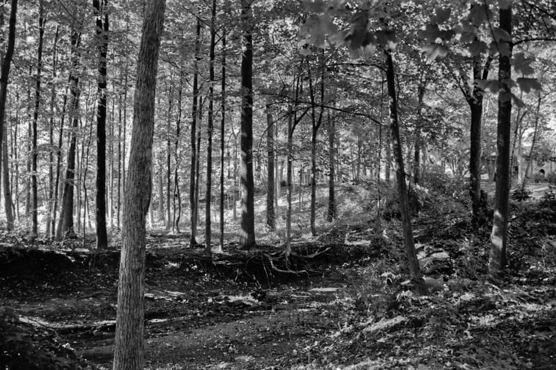 Forest in Flint Film Photography 10
