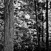 Forest in Flint Film Photography 4