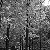 Forest in Flint Film Photography 6