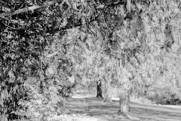 Forest in Flint Film Photography 15