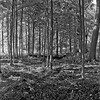 Forest in Flint Film Photography 11