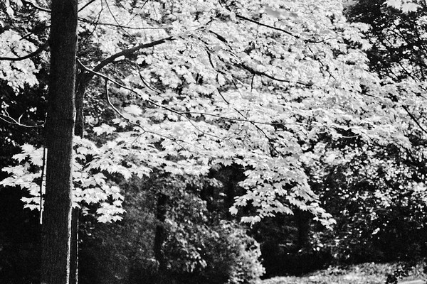 Forest in Flint Film Photography 2