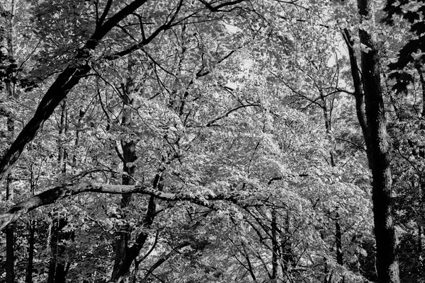 Forest in Flint Film Photography 9