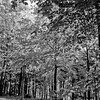 Forest in Flint Film Photography 13