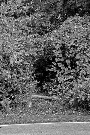 Forest in Flint Film Photography 7