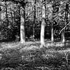 Forest in Flint Film Photography 8