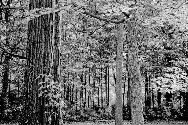Forest in Flint Film Photography 1