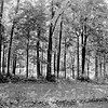 Forest in Flint Film Photography 12