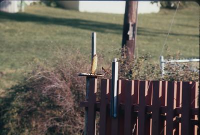 Backyard, Platte City, MO, August, 1973