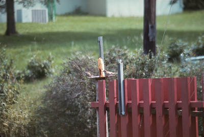 Backyard, 200mm Focal Lens, Platte City, MO, August, 1973