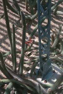 Cactus, Pheonix, AZ, August 1971