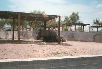 Pheonix Zoo, Pheonix, AZ, August 1971