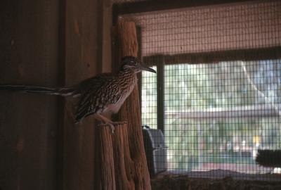 Bird, Pheonix, AZ, August 1971