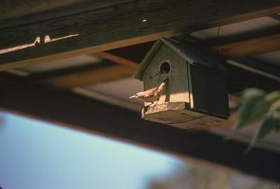 Birdhouse, Platte City, MO, June 1974
