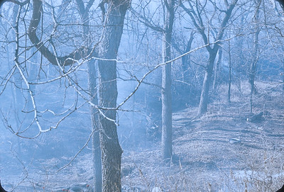 Working In The Timber Clearing And Burning Dead Trees, Kansas, November 1974