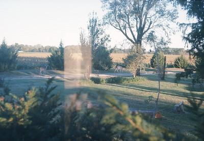 Deer At Farm, Harveyville, KS, Fall 1974