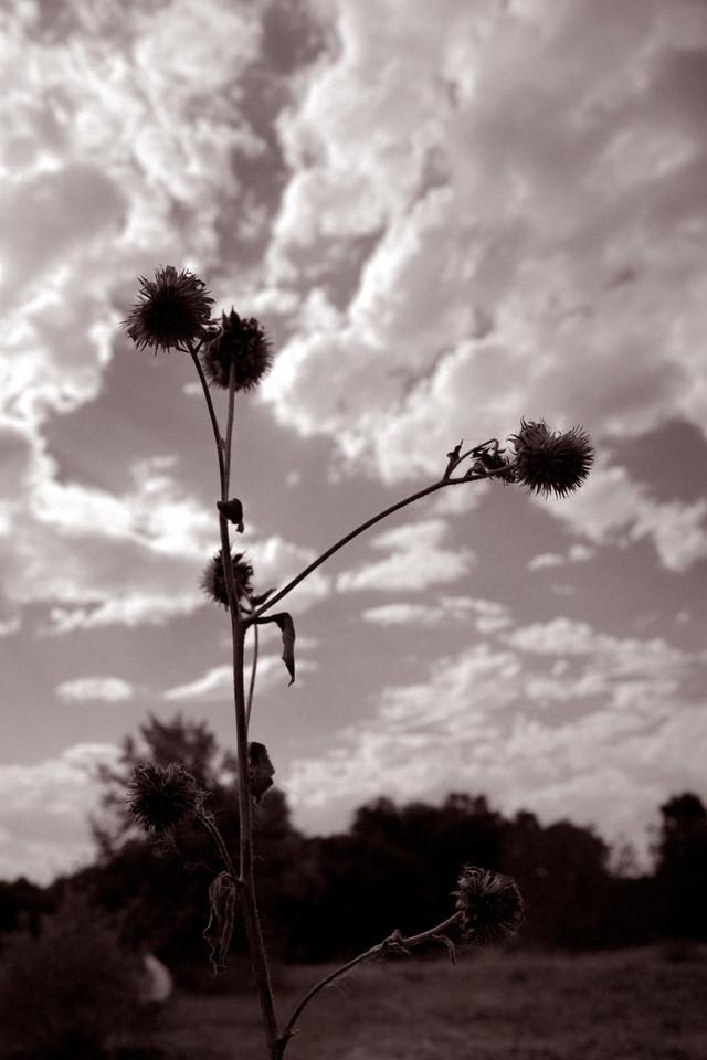 Weeds 'n Clouds